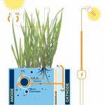 【能源科技】種瓜得瓜種豆得豆,那種樹得什麼呢?