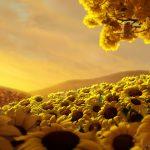 【能源科技】太陽能過去、現在與未來(六):碳回收