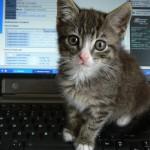 【科技趣聞】美國一年遭貓狗破壞的3C產品總額達30億美元