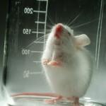 再生醫學逆轉勝:老鼠體內直接誘導出幹細胞,有助未來人體器官修復