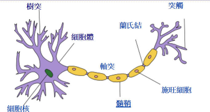 brain cell synapse