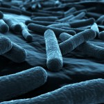 基因改造大腸桿菌,助生質能源產量提升 50%