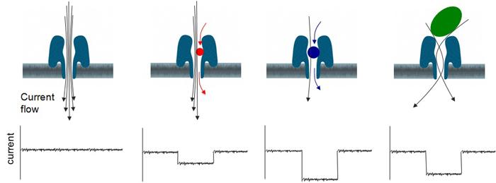 Nanopore_sensing