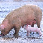 丹麥研究找到新的肥胖遺傳基因