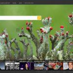 Microsoft 搜尋引擎 Bing 接近獲利 不考慮出售