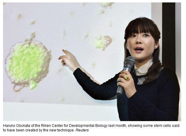 日女科學家 STAP 多能幹細胞被批造假 學界群起圍攻
