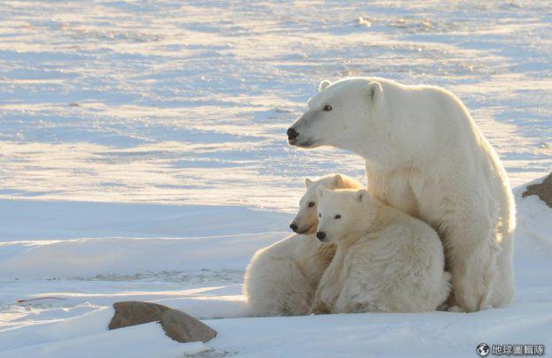 北极熊家园一览无遗