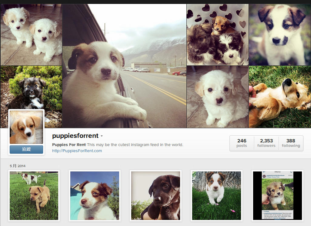 puppiesforrent-on-Instagram