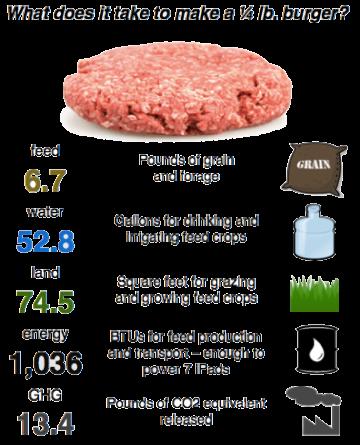 BurgerProblem_24-360x445