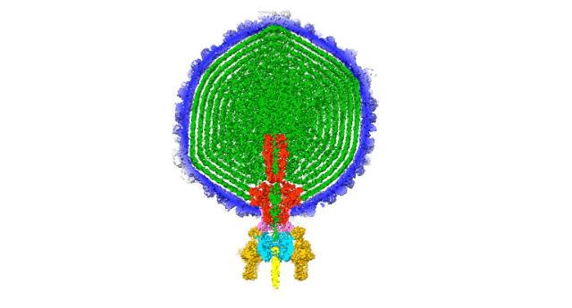 3D_Phage