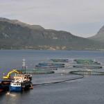 新循環經濟:挪威用發電廠排放 CO2 生產海藻飼料,並投入養殖漁業