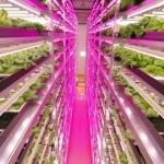 日本宮城縣啟動全球超大規模室內全 LED 園藝專案  最先進的室內養殖技術將推廣全球
