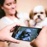 微軟亞當計畫影像能力強,可辨識狗品種、分析皮膚傷口症狀