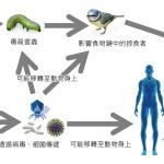 基因改造作物先誰先受害?是環境還是人?