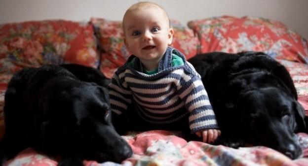 終結新生兒氣喘:睡在動物毛皮上