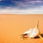 drought-skull_310_215