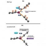 中研院找到 DNA 煞車系統,防癌露曙光