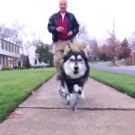 3D 列印技術提升雞犬升天,雙腿殘狗健步如飛