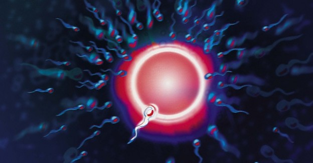 Human Fertilization sperm egg