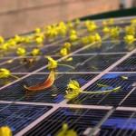 太陽能科技放眼未來 ── 2014 回顧系列:綠能新技術回顧