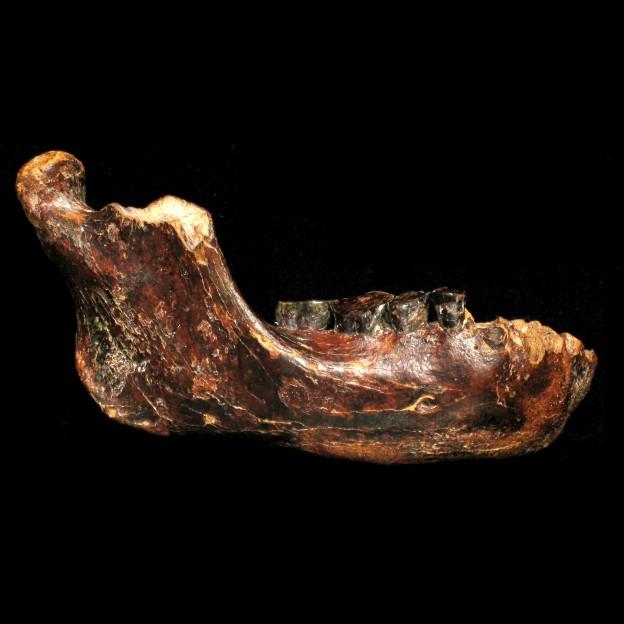 penghu-1-fossil