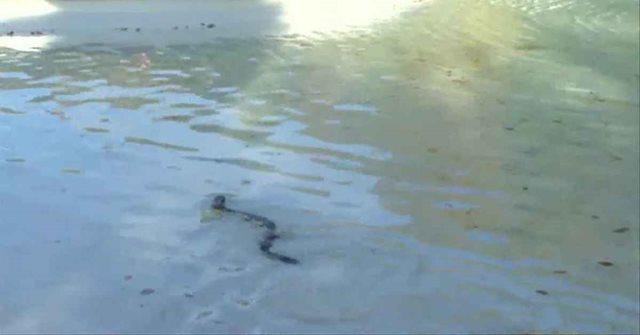 snakebot.png amphibot