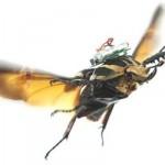 把昆蟲當成無人機,這讓人們更了解另一個世界