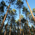 為了更環保的包裝盒,蘋果公司買下了 3.6 萬英畝森林