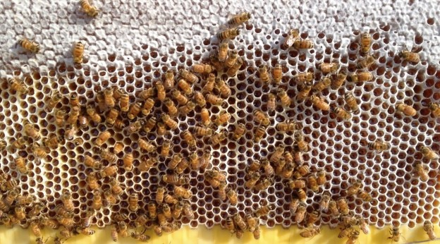 bees_working_frame-gallery173_Feb18220342