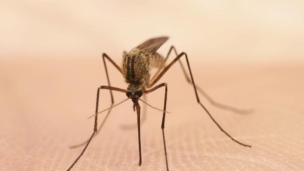 氣候變遷禍不單行,加州乾旱引發西尼羅病毒流行