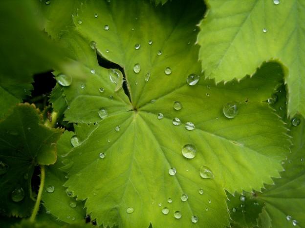 leaf 20150820