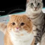 貓臉辨識餵食器背後團隊「奇群科技」已解散?為清償債務結束子公司,母公司仍在