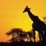 微信支付海外首站竟然選在南非