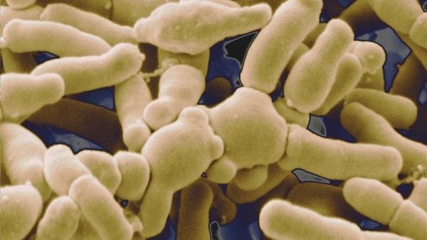好腸菌不僅助消化,還可加強免疫療法來抗癌?