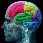 英科學家提出最新基因理論,奠定解析人類智力運作機制的基礎