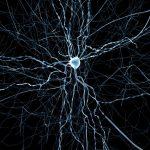 研究顯示:氣喘藥新功用,能讓老化大腦細胞回春