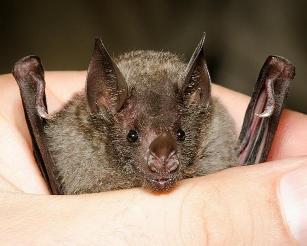 http://technews.tw/2016/02/28/bat-immune-system/