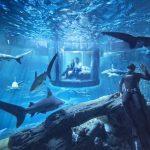 想當鯊魚的室友嗎?Airbnb 讓你有機會與 35 隻鯊魚免費睡一晚