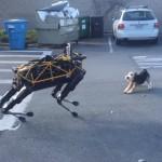 機器狗與真狗首次對決,誰能佔上風?
