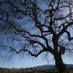 新「生命之樹」誕生,增加上千種新物種