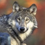 FLICKR USFWS Endangered Species