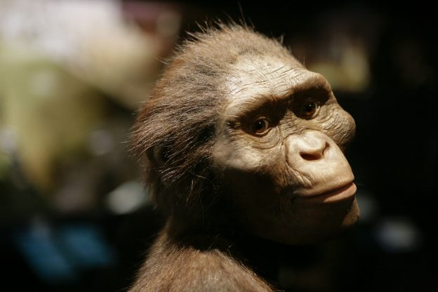 下載自美聯社 An artist's life-sized model of Lucy, based on the  3.2 million year old Australopithecus afarensis skeleton called Lucy, is part of a new exhibit shown during a press preview at the Houston Museum of Natural Science in Houston Tuesday, Aug. 28, 2007. The exhibit opens to the public on Friday, Aug. 31.(AP Photo / Michael Stravato)