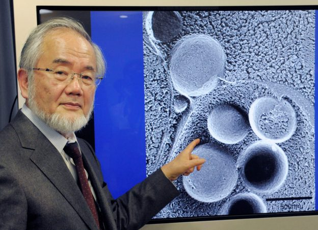 下載自路透 Yoshinori Ohsumi, a professor of Tokyo Institute of Technology is pictured in Tokyo, Japan, March 25, 2015 in this photo released by Kyodo. To go with NOBEL-PRIZE/MEDICINE   Mandatory credit Kyodo/via REUTERS ATTENTION EDITORS - THIS IMAGE WAS PROVIDED BY A THIRD PARTY. EDITORIAL USE ONLY. MANDATORY CREDIT. JAPAN OUT. NO COMMERCIAL OR EDITORIAL SALES IN JAPAN.       - RTSQIIO