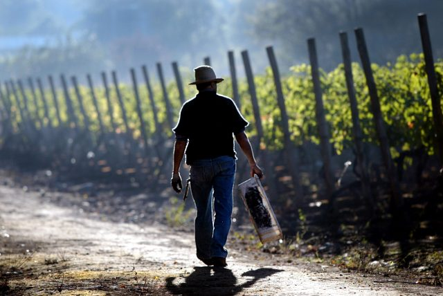 下載自路透 - PHOTO TAKEN 02APR04 - A Chilean worker walks with a crate during the harvest at Santa Rita vineyard, 40km south of Santiago. Chile