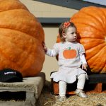 下載自路透 Evelyn Buhagiar, of Pacifica, sits next to two pumpkins during the 42nd annual Safeway World Championship Pumpkin Weigh-off in Half Moon Bay, California October 12, 2015. REUTERS/Stephen Lam - RTS462G