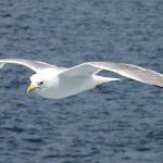 海洋食安危機 為何海鳥不斷吞食塑膠