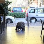 街道上的隱藏珍寶!藏身西班牙街道地磚的古代海牛化石
