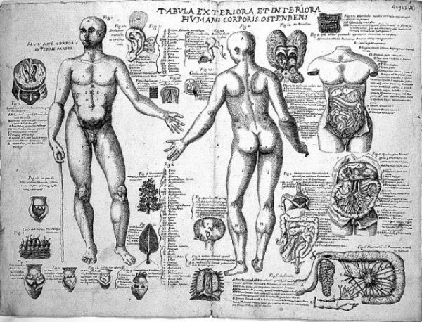 Anatomical_sketches wiki