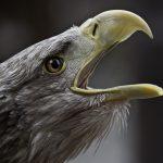 借助公民科學家的協助,科學家更了解鳥喙的演化過程