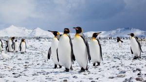 FLICKR Antarctica Bound